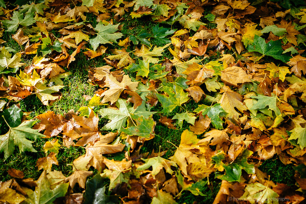 A carpet of fallen leaves on a grassy background