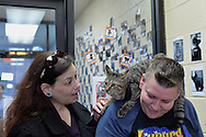 Wantagh, New York, USA. 7th February 2016. Tiger the tabby cat, one of the team players in the Hallmark Channel Kitten Bowl III, is with his new family -CHARLIE BROWN, whose shoulder the star now called Yogi is lying on, and MELANIE BENEDETTO, of Massapequa - at Last Hope Animal Rescue's Open House, where the adoption center's volunteers and visitors watch the game on TV and cheer on their team, the Last Hope Lions. Over 100 adoptable kittens from Last Hope Inc and North Shore Animal League America participated in the taped games, and the Home and Family Felines won the 2016 championship, which first aired the day of Super Bowl 50.