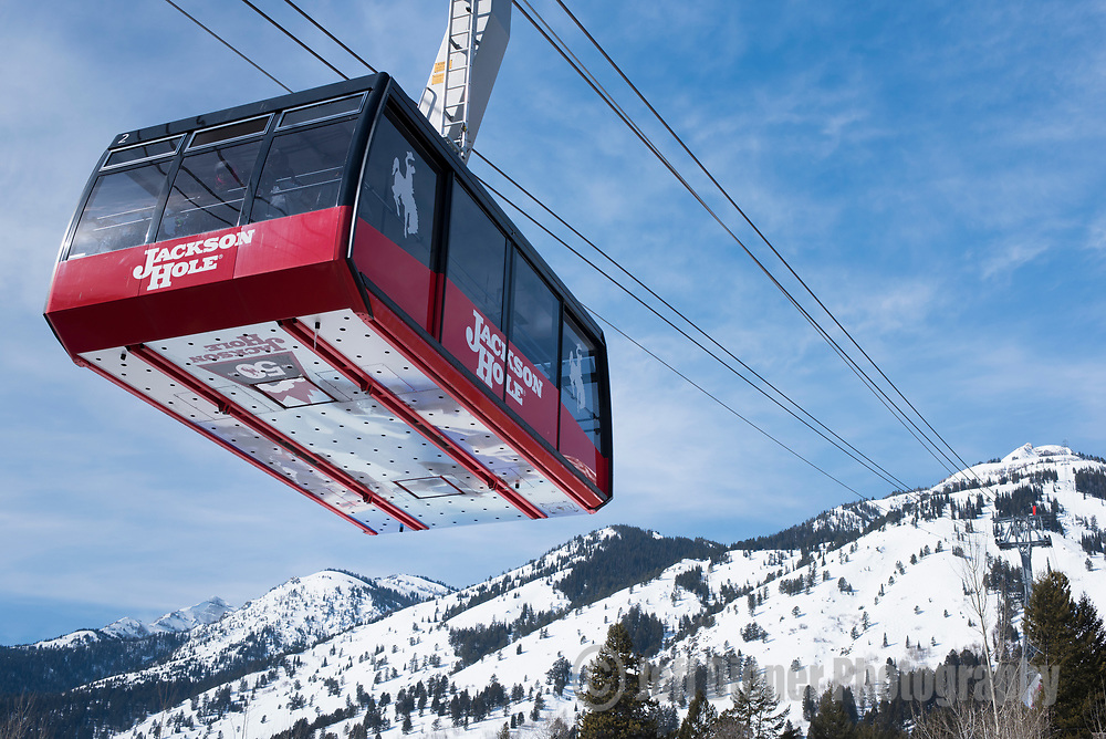 The famous Jackson Hole aerial tram departs the base area at Jackson Hole Mountain Resort, Wyoming.