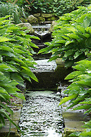 small rill in a woodland garden planted with various hosta varieties