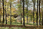 Friston Forest, East Sussex, UK