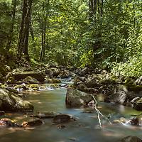 Creek rippling through dense forest - Baxter's Hollow, Wisconsin