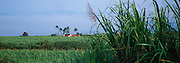 Sugar Cane Fields, Kekaha, Kauai, Hawaii, USA<br />