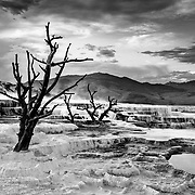 The bacteria formations at Mammoth Hot Springs consume a series of trees in their path.