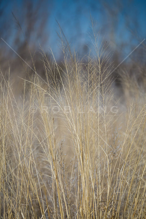 Tall Grass in New Mexico