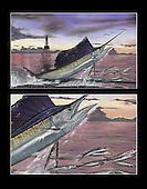 Ocean Drive_sailfish