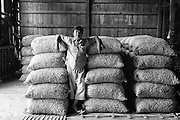 Myanmar. Gentleman in charge of a garlic collecting, sorting and packing warehouse. Shan State.