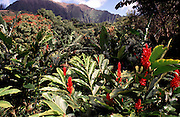 Red Ginger, Oahu, Hawaii<br />