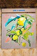 Painting of local lemons, Riomaggiore, Cinque Terre, Liguria, Italy