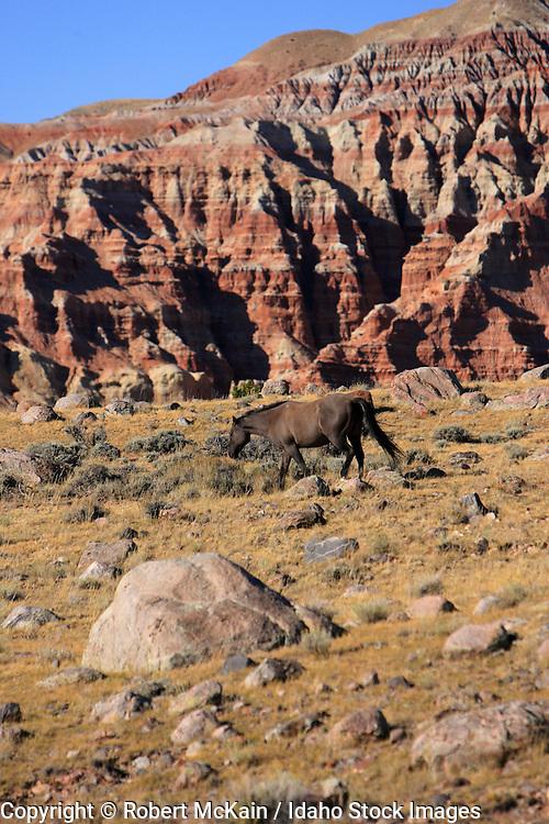 WYOMING. Dubois. Horses in desert canyon. September 2008. #ah080003