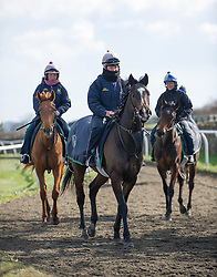 © Licensed to London News Pictures. 22/03/2014<br /> <br /> Middleham, North Yorkshire<br /> <br /> Emma Wilkinson (centre) leads a group of horses and riders during morning exercise at the Mark Johnston stables in Middleham, North Yorkshire. Race horses have been trained in Middleham for over 200 years using the extensive gallops on the high moor. There are currently 15 stables based around the small Yorkshire village.<br /> <br /> Photo credit : Ian Forsyth/LNP