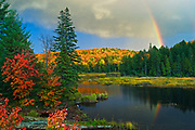 Rainbow and autumn colors<br />