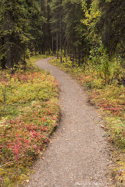 Triple Lakes Trail winding through forest, Denali National Park, Alaska