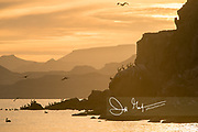 Brown pelicans rest in along the cliff at sunset on Isla San Francisco in Baja California, Mexico.