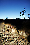 Joshua Tree National Park in headlights
