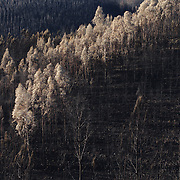 The highly destructive wildfire season of 2017 in Central Portugal.