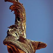 Taken at Dixie National Forest, Utah.
