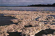 Natural Foam that accumulates after river rises. Proteinaceous foam, plant breakdown products.<br />Napo River<br />Amazon Rain forest<br />ECUADOR. South America