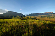 La Gran Sabana, Venezuela, 14-04-2011.Camino hacia el  Roraima y Kukenam tepuy en La Gran Sabana.  Localizada al sur de Venezuela en el macizo Guayanés en la parte sureste del Estado Bolívar hasta la frontera con Brasil. En ella conviven diversos grupos indígenas, entre ellos la etnia Pemón. La Gran Sabana forma parte de uno de los Parques Nacionales más extensos de Venezuela, el Parque Nacional Canaima. La Gran Sabana, 14 Abril  de 2011. .(Ramon Lepage / Orinoquiaphoto/ LatinContent/Getty Images)..Trail to Kukenam and Roraima tepui. Tepuis are large mesas that rise out of dense jungle in southeast Venezuela and adjacent Brazil and Guyana. Over 100 of these plateaus rise above the verdant landscape of this region, which is known in Venezuela as the Gran Sabana and also the Guyana Highlands. Tepuis are comprised of Precambrian sandstone, and are some of the oldest exposed rock formations in the world. Monte Roraima is one of the best known of the tepuis and has a labyrinth of rock forms and endemic plants on its summit..