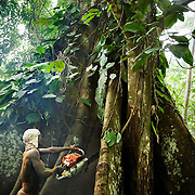 Ghana illegal logging