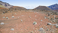A flat area within Haleakala Crater with a number of Silversword plants growing and dying, Haleakala National Park, Maui, Hawaii.