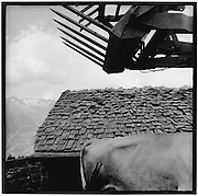 Cowback and dregde shewel infront of a broken old shingle-roof, Baggerschaufel, kaputtes Schindeldach, tavillons, toit, defectueux, alpage, Valais, Turtmann