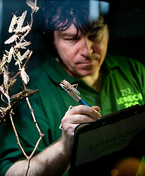 ©London News Picures. 04/01/2011. A Zoo keeper with crickets before making a record of their numbers at London Zoo as part of the zoo's annual stocktake on January 4, 2011 in London, England. ZSL London Zoo is home to over 650 different species which all need to be cataloged in their annual stocktake which is a compulsory requirement for their zoo license.Photo credit should read Fuat Akyuz/London News Pictures.
