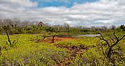 Brackish lakes and vegetation at Dragon Hill, Santa Cruz, Galapagos.