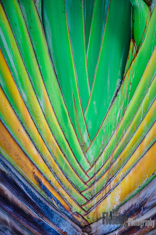 Colorful and abstract close-up of tropical plant
