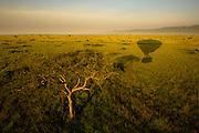 Maasai Mara, Kenya, Africa