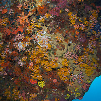Invertebrates growing on rock, Tenggol Island, Tanjong Jara Resort, Terengganu, Malaysia.