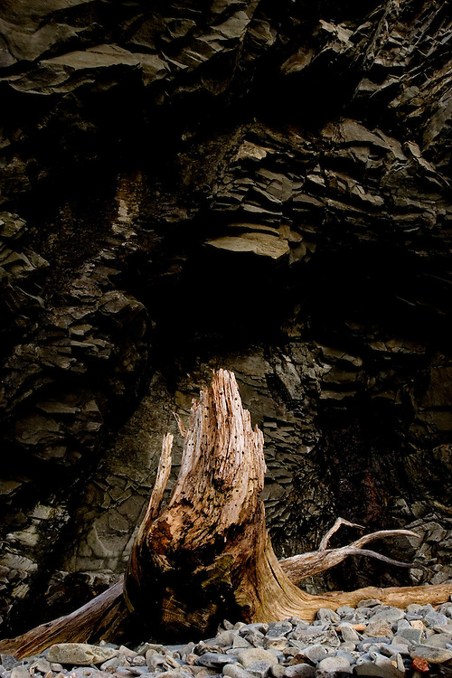 At low tide near the Cape Enrage lighthouse, a tree stump has become driftwood near a cliff on the Bay of Fundy in Alma, New Brunswick, on June 27, 2012. Mariners gave the area its name due to the long reef that caused many shipwrecks. (Photo by Geoff Hansen)
