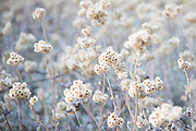 Photo wildflowers, matted print, wall art, California nature, hiking, photography. Santa Monica Mountains, Native Plants, Temescal Canyon, Westside, Venice, Los Angeles, Fine art photography limited edition.