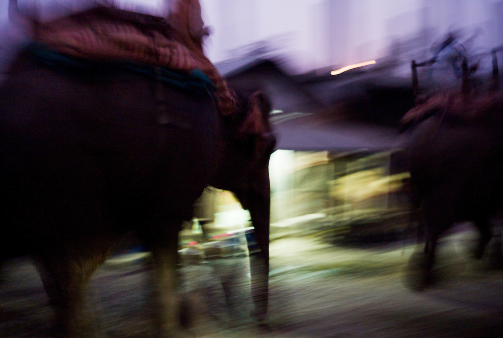 Like ships silently gliding through dark waters, elephants return at dusk through the now-quiet streets of Chitwan at the end of another day.