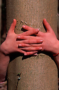 A912G7 Girls linked hands clasped around a tree trunk