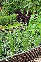 Edging round salsify bed