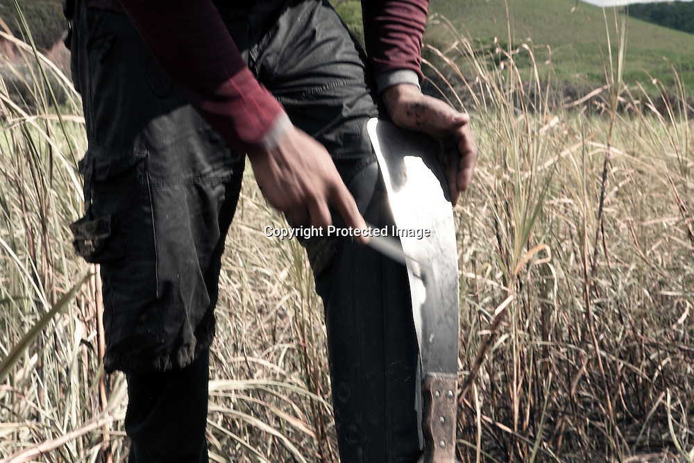 Seasonal sugarcane worker sharpening his special knife to haverst the cane in a farm located in the coastal area of Ipojuca in the Northeast state of Pernambuco, Brazil. In this area sugarcane is havested by hand.