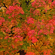 """Changes in the Morning""<br />