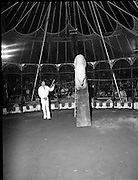 08.09.1984<br /> 09.08.1984.<br /> 8th September 1984.<br /> Chipperfield's circus performed before packed houses in Mullingar, Co Westmeath.<br /> <br /> Image shows the polar bears beginning their performance,under the watchful eye of a trainer. Many of the audience a very up-close view. One of the bears begins to come down a slide.