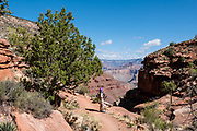 Hike the Hermit Trail from Hermits Rest to Lookout Point. Grand Canyon National Park, Arizona, USA. Starting at least 5 to 17 million years ago, erosion by the Colorado River has exposed a column of distinctive rock layers, which date back nearly two billion years at the base of Grand Canyon. While the Colorado Plateau was uplifted by tectonic forces, the Colorado River and tributaries carved Grand Canyon over a mile deep (6000 feet), 277 miles  long and up to 18 miles wide.