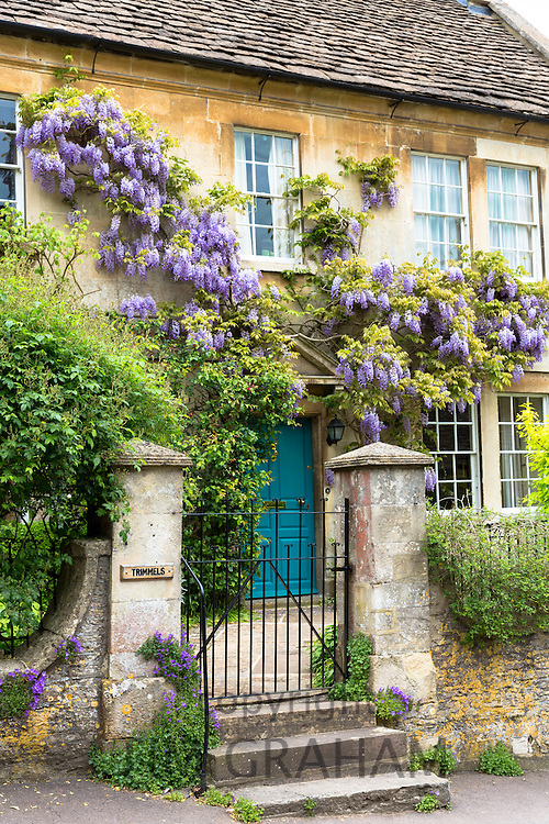Wysteria flowering shrub in bloom at traditional English period house  in quaint village of Castle Combe in The Cotswolds, UK