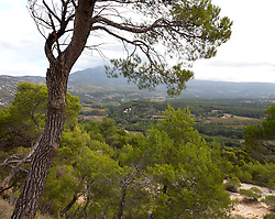 Landscape, high plateau of the Vaucluse, near Sault, Provence