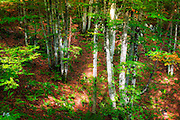 Mixed forest, Plitvice Lakes National Park, Croatia