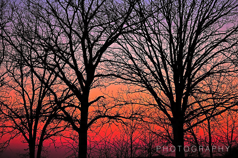 Colorful winter sunset with sillouetted trees;  Minnesota.
