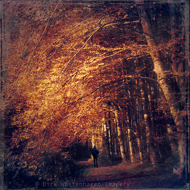 Illuminated autumnly forest path that leads into darkness.<br /> Prints: http://society6.com/DirkWuestenhagenImagery/on-a-dark-path_Print#1=45