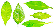 Arbor day concept Digitally enhanced image of five leafs of houseplants on white background