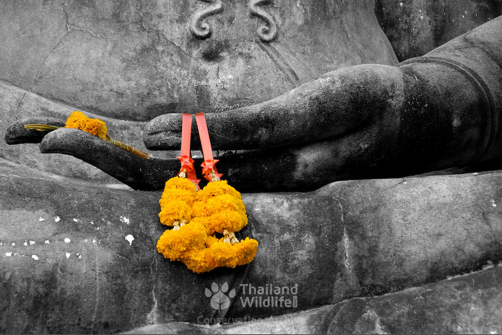 Buddha statue hand with flower garland at Wat Mahathat in Sukhothai. The Sukhothai kingdom was an early Thai kingdom in north central Thailand. It existed from during the 13, 14, 15th centuries The.old capital is in ruins and is a Historical Park..View from Feb, 2007.