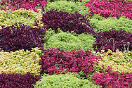 Plants in a checkerboard pattern in the Jardim Botanico, Madeira, Portugal
