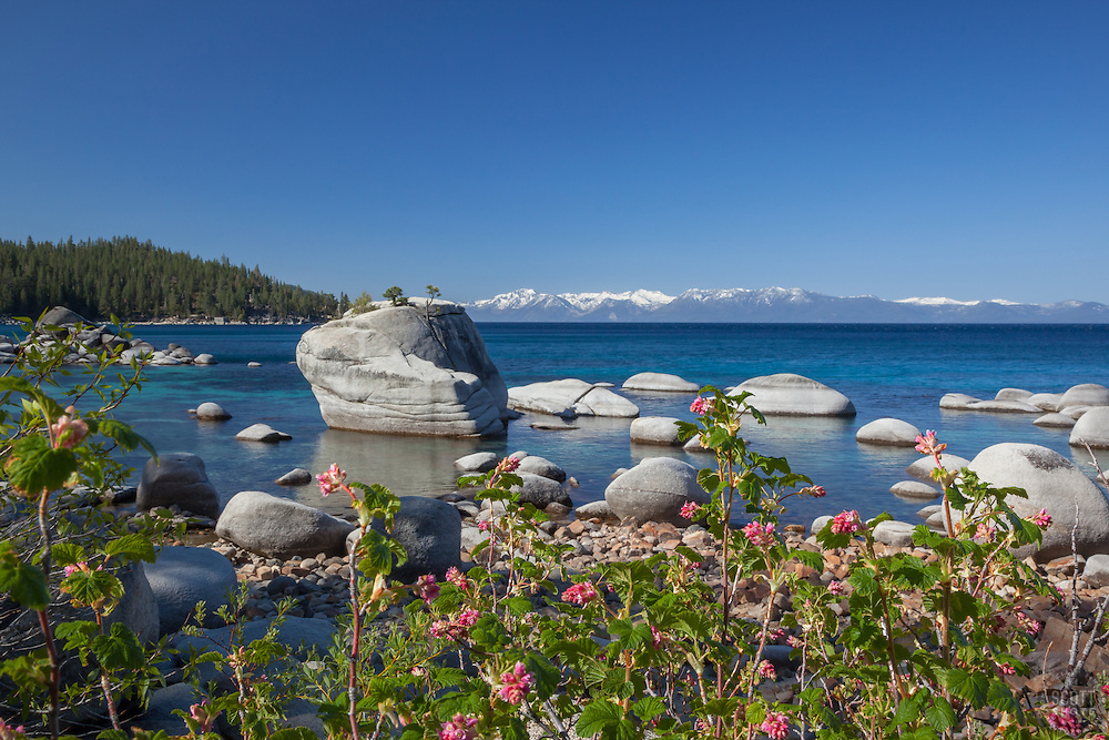 """Wildflowers at Bonsai Rock 1"" - These wildflowers were photographed along the East shore of Lake Tahoe at Bonsai Rock."
