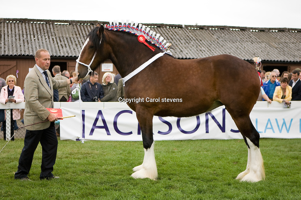 Great Yorkshire Show 2010   <br /> Shire Horse Classes<br /> Francis and Mark Richardson<br /> Bewholme Moonlight Sensation